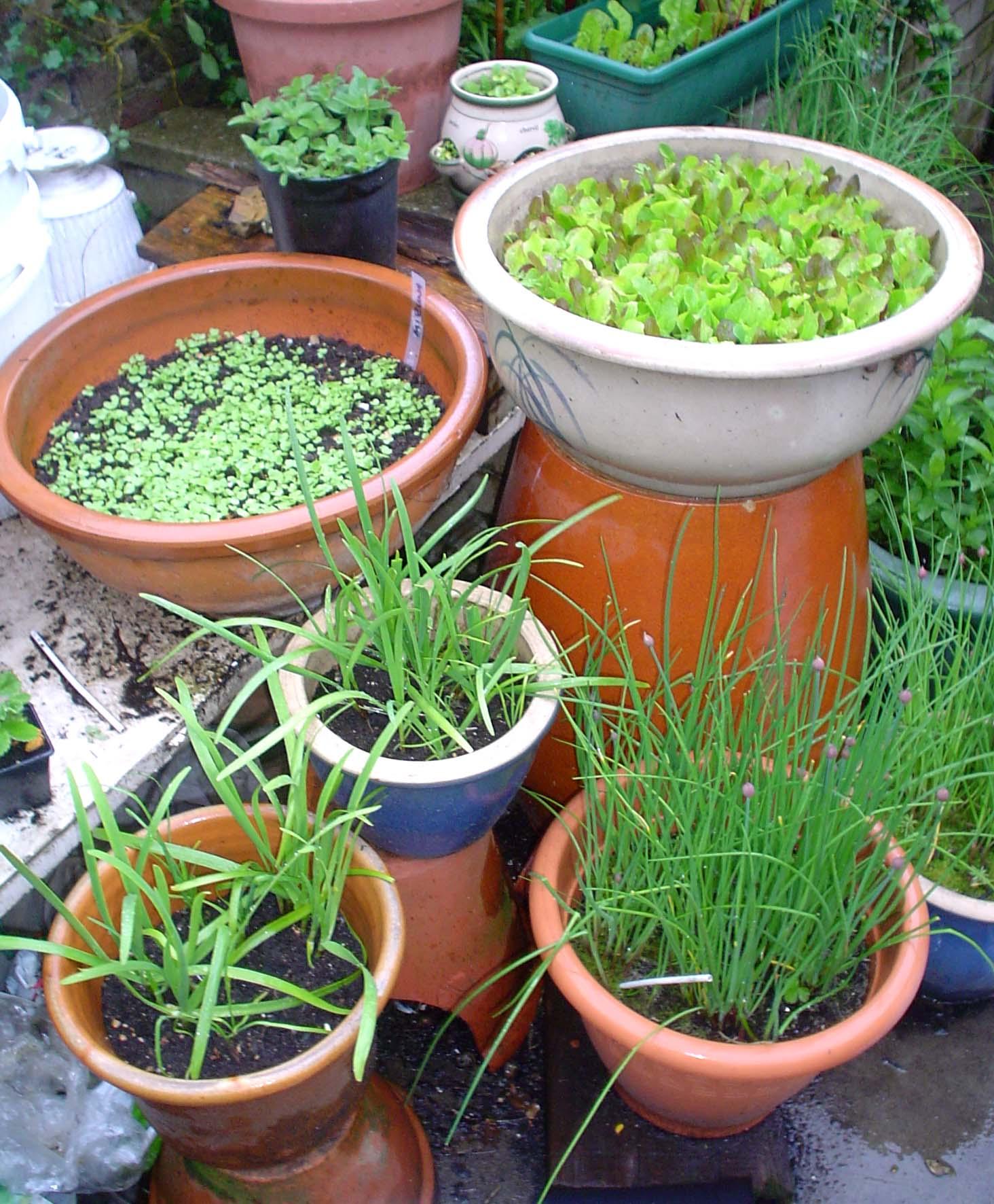 http://www.writeserve.com/garden2010.JPG
